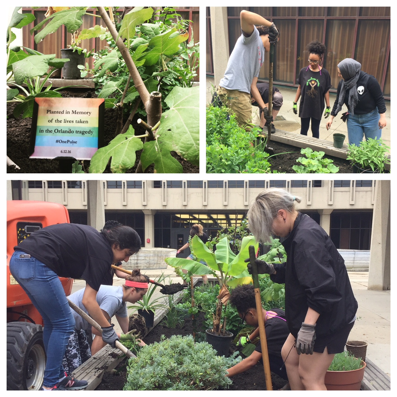 a collage of three images with students gardening