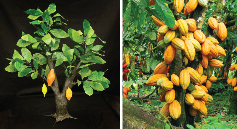 Theobroma Cacao Tree Replica
